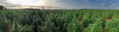 Delta Agriculture launches hemp fiber line to expand industrial-scale capacity