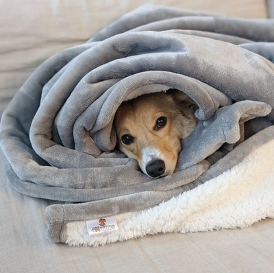 A Waterproof Plush Dog Blanket Built for Comfort & Protection