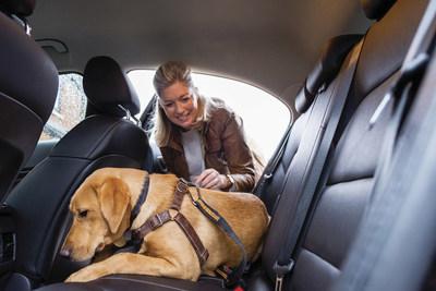 Plan a Pet-Friendly Getaway