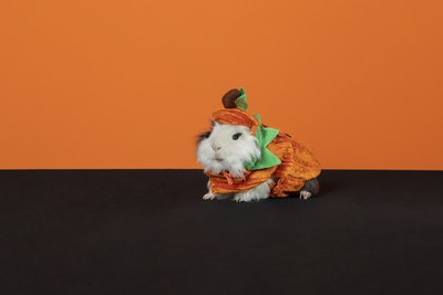 Dressing Your Guinea Pig or Bearded Dragon for Spooky Season? PetSmart Shares Tips for Safely Dressing Small Pets