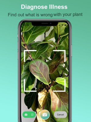 Be The Plant Parent You've Always Wanted to Be with This Plant Identification App: Plantility Plant Scanner