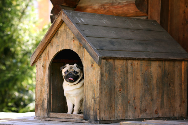 Pet Ownership Soars Among Home Buyers, Influencing Purchase Decisions