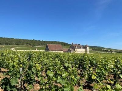 Evenstad Estates Announces Landmark Burgundy Vineyard Expansion