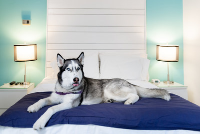 Canalside Inn is Dog Friendly at the Nation's Summer Capitol Rehoboth Beach, DE